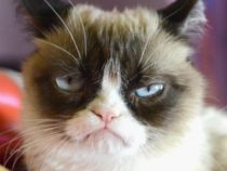 Internet's Most Famous Grumpy Cat dies At Age 7