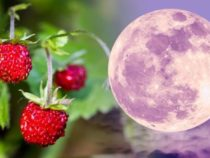 The Full moon of the year: The full 'Strawberry Moon' will rise this end of the week
