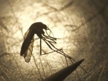 Idaho's first West Nile Virus diseases of the year recognized in 2 individuals